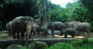 Gajah Kembali Mengamuk, Warga Pintu Rime Gayo Mengungsi