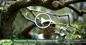 [Video] KBQ Baburrayyan Berikan Penyuluhan Pemangkasan Kopi