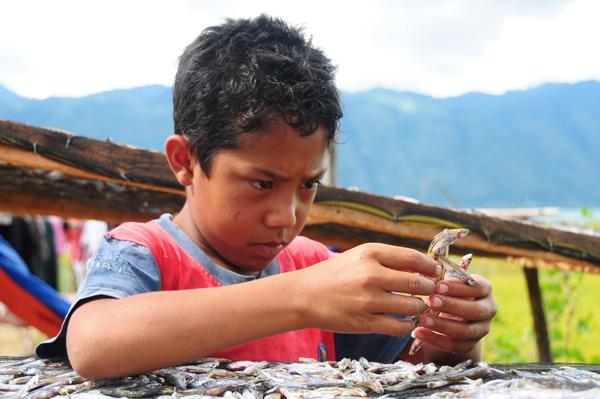 Mujemur Depik (Menjemur ikan Depik). (Foto : Khalisuddin)