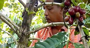 Dari Pegunungan Tapaktuan, Bang Hen Belajar Kopi Gayo di Singah Mulo