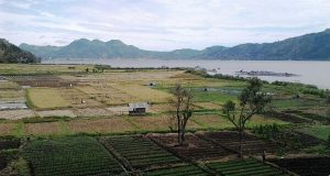 Hamparan Lahan Pertanian Buat Tepi Lut Tawar Makin Cantik