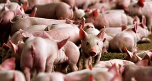 Imbas Bakso Babi, Pedagang di Bener Meriah Mengeluh