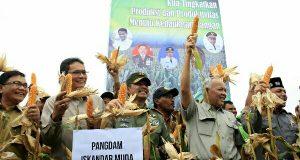 Di Pijay, Pangdam IM Panen Jagung Perdana Seluas 500 Hektar