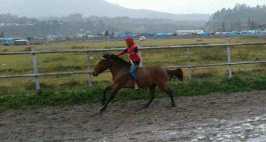 Kuda-Kuda Pacu Lindas Line Licin di Belang Bebangka