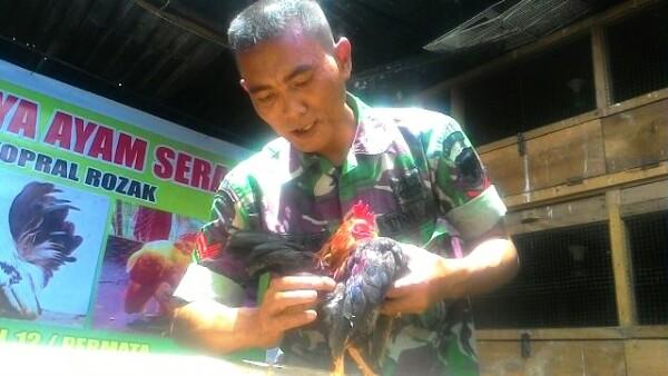 Koptu Rojak dan Ayam Serama