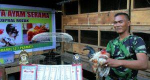 Koptu Rojak; Peternak Ayam Mungil untuk Kontes Kecantikan di Gayo
