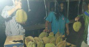 Yuk ke Pining, Durian Lagi Runtuh Bebas