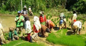 Perubahan Struktur SKPK Tidak Merubah Tugas dan Fungsi Penyuluh Pertanian