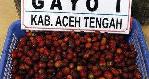 Jokowi Sentil Rendahnya Produksi Kopi Arabika Gayo