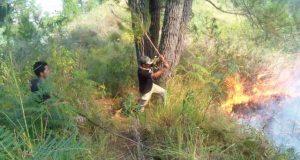 Kader HMI Takengon Jadi Relawan Padamkan Api di Bur Gayo