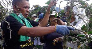 Geliat Petani Kopi di Kaki Gunung Sinabung