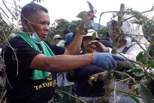 Abdurrahman Menunjukkan Cara Pemangkasan Kopi Kepada Petani di Kaki Gunung Sinabung. (Ist)