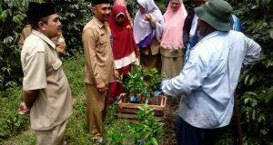 Distan Aceh Tengah Fokus Kawal Pengembangan Jeruk Keprok Gayo