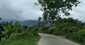 Warga Gayo Lues Cemas karena Keberadaan Batang Pohon Ini