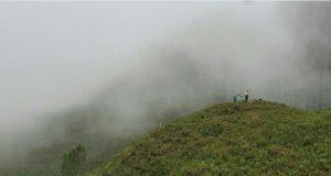 Kabu-kabut jambu di Genting (Fto: Adwin Maulana)