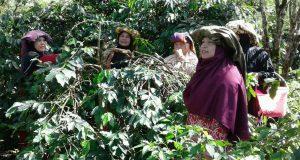 Reje Banan Gayo; Pembangunan SDM dan Fisik Harusnya Berbarengan