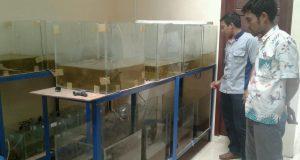 Depik Bisa Dipijahkan, Dipelihara di Kolam dan Aquarium