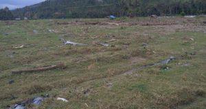 Abrasi Sungai, Sawah Tripe Jaya Gayo Lues Tidak Bisa Digarap