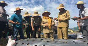 Program Polisi Berkebun Berlanjut, Bupati Nasaruddin Ajak Warga Manfaatkan Lahan Tidur