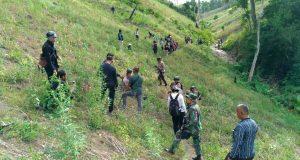 8,1 Hektar Ladang Ganja Ditemukan di Aceh Besar
