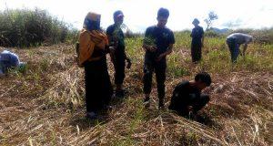 Gabungan Pemuda Aceh Tengah Tanam Pohon Pinus di Bur Lancok Leweng