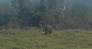 Kawanan Gajah Liar Dekati Pemukiman, Warga PRG Bener Meriah Trauma