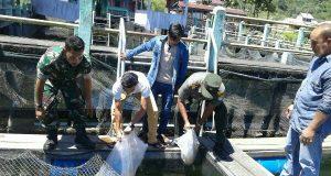 Ribuan Benih Ikan Nila Ditebar di Keramba Toweren