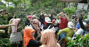 Royal Coffee ke Kebun Kopi Gayo, Koperasi Ketiara Bikin Kejutan
