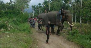 Kehabisan Logistik, Penggiringan Kawanan Gajah Rime Raya Dihentikan