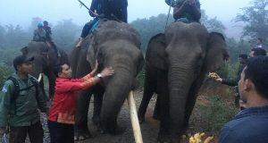 Tim CRU Berhasil Giring Kawanan Gajah Liar, Ahmadi : Alhamdulillah!