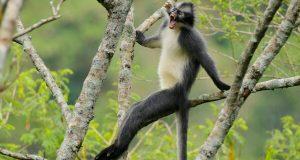 Ekowisata Flora dan Fauna Tersembunyi di Burni Telong
