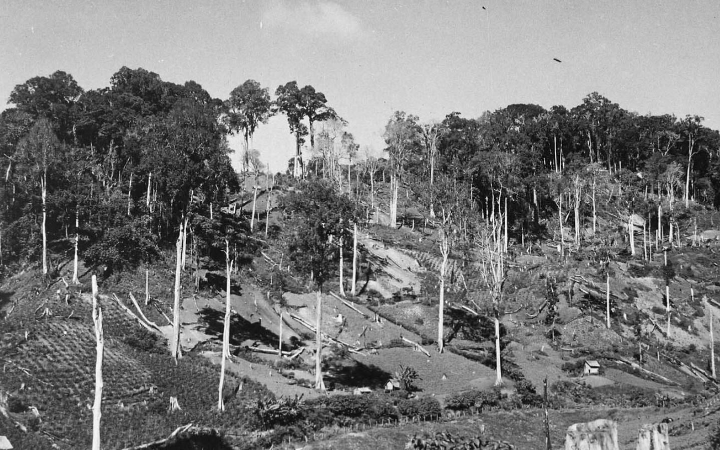 Perkebunan Kopi Milik Veenhuyzen di Paya Tumpi